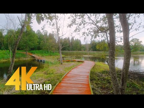 Landscapes of Lithuania - 4K Nature Walk on a Rainy Day with Nature Sounds