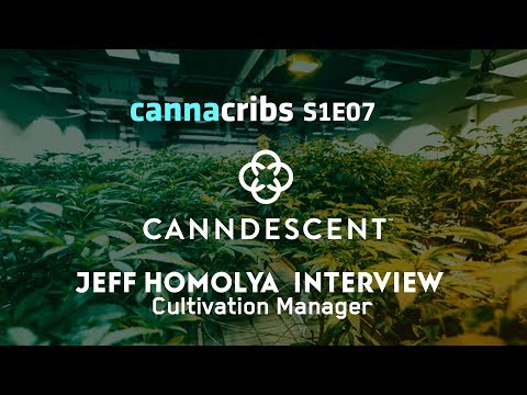 Premium Cannabis - Top LA Grower Now Leads Cultivation at Canndescent: Jeff Homolya