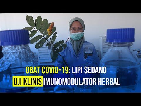 LIPI Tengah Uji Klinis Imunomodulator Herbal Sebagai Obat Covid-19