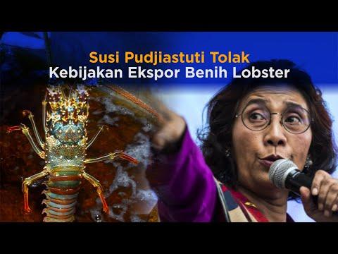Susi Pudjiastuti Tolak Kebijakan Ekspor Benih Lobster