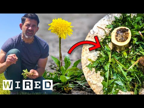 How To Turn Garden Weeds Into Meals | Basic Instincts | WIRED