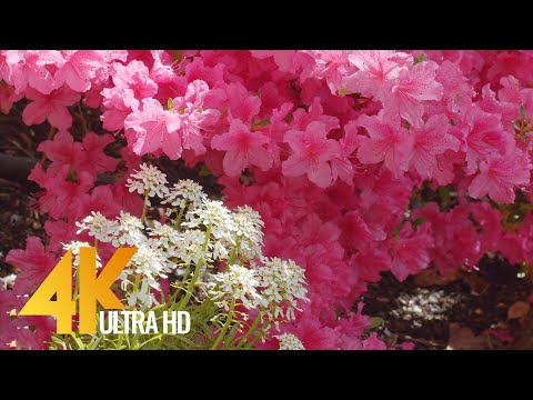 Summer Day in a Beautiful Flower Garden 4K UHD - Short Preview Video