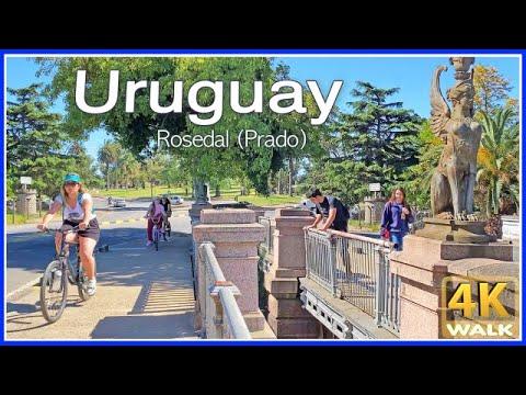 【4K】WALK Montevideo URUGUAY 4K video ROSE GARDEN UY travel