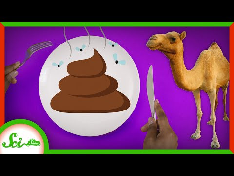 How Eating Camel Dung Saved Lives