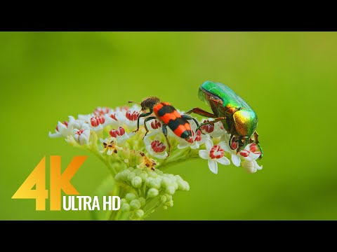 Amazing Insects World - 4K Relaxation Video with Various Nature & Insects Sounds