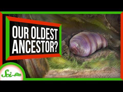 This Worm-y Critter Is (Probably) Our Oldest Ancestor | SciShow News