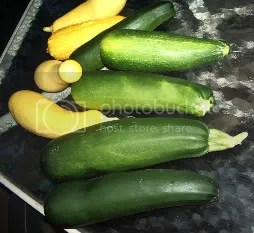 zucchini and squash from the garden