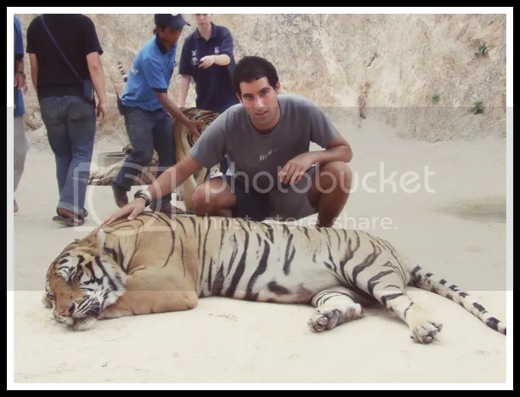 Thailand, The Tiger Temple, Royi Avital