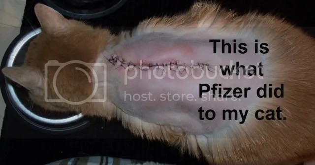 This is what Pfizer did to my cat.