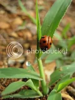 ladybug in korea