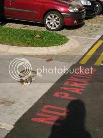 no parking unless you're a cat
