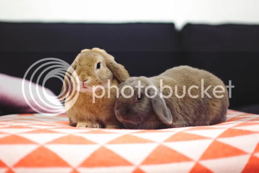 Help mijn konijn sloopt alles | foreverpetite.net