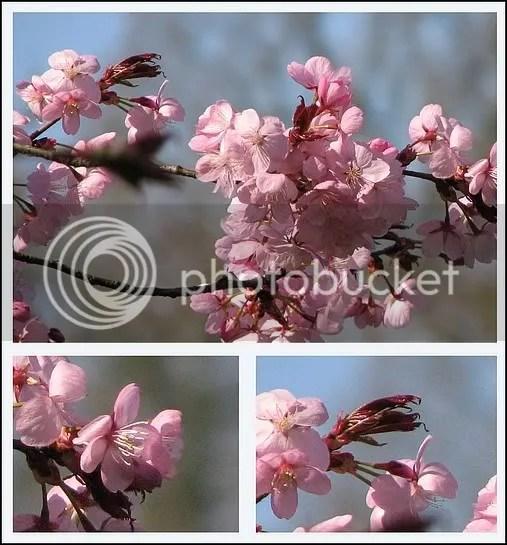 https://i0.wp.com/i21.photobucket.com/albums/b276/jaci_/2007/bloemen/bloesem.jpg