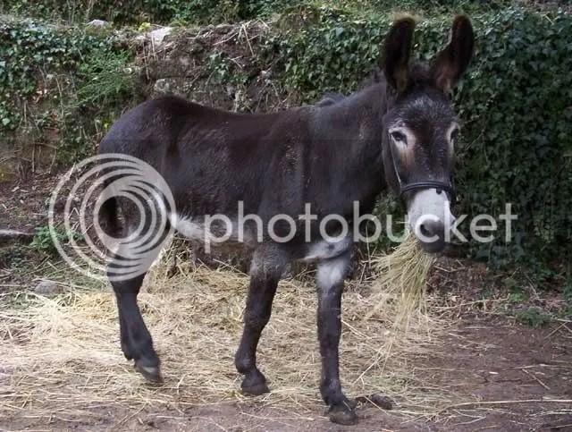 donkey photo: donkey zack.jpg