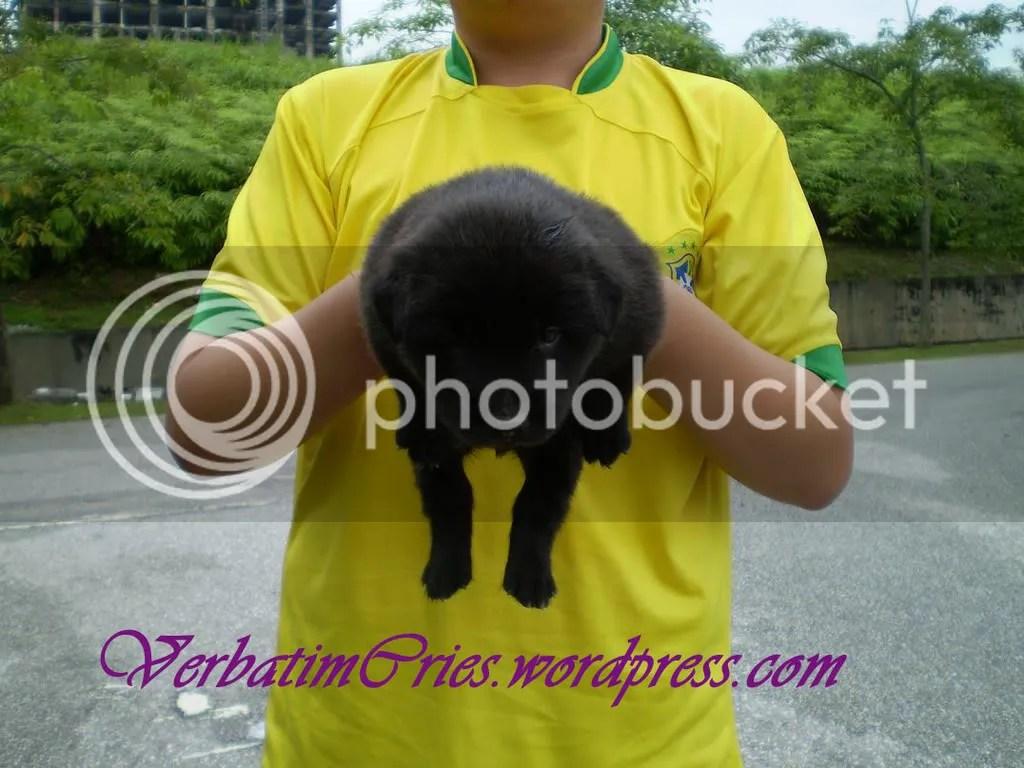 Man Handdled pup