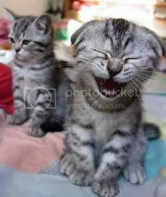 laugh cat