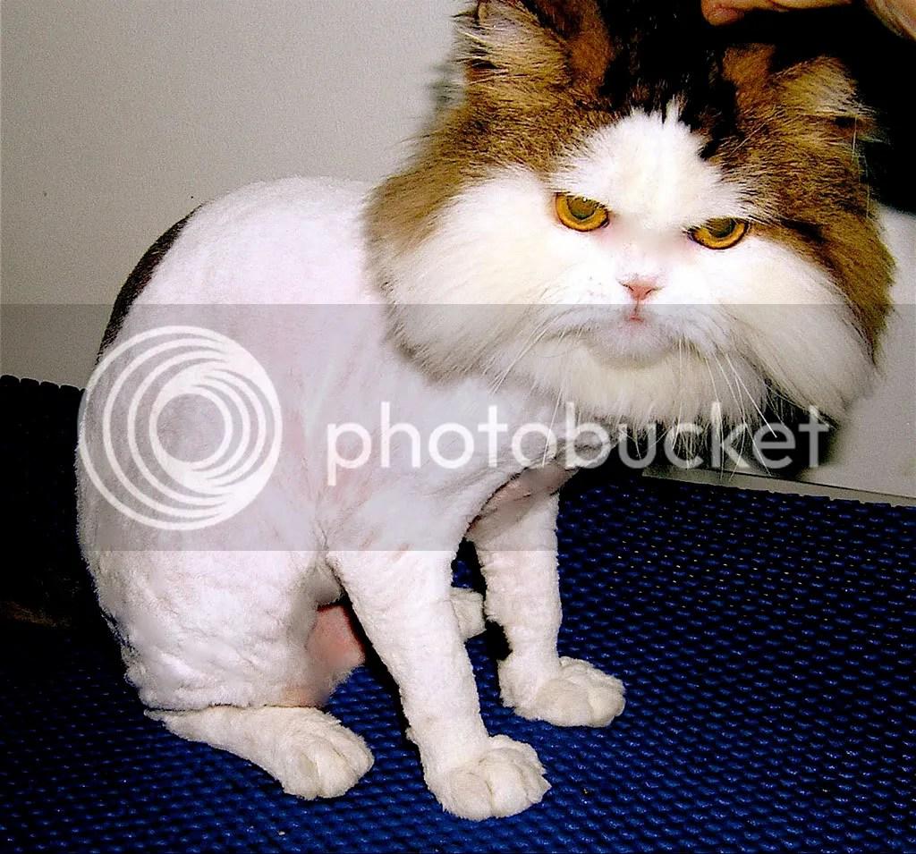 pussy 2