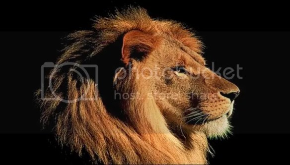 lion Pictures, Images and Photos
