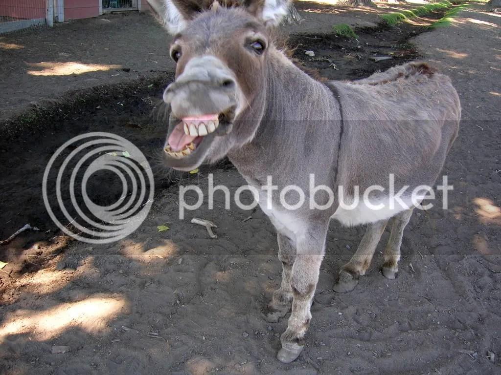 donkey20oatie20image.jpg image by ChelseagirlinDC