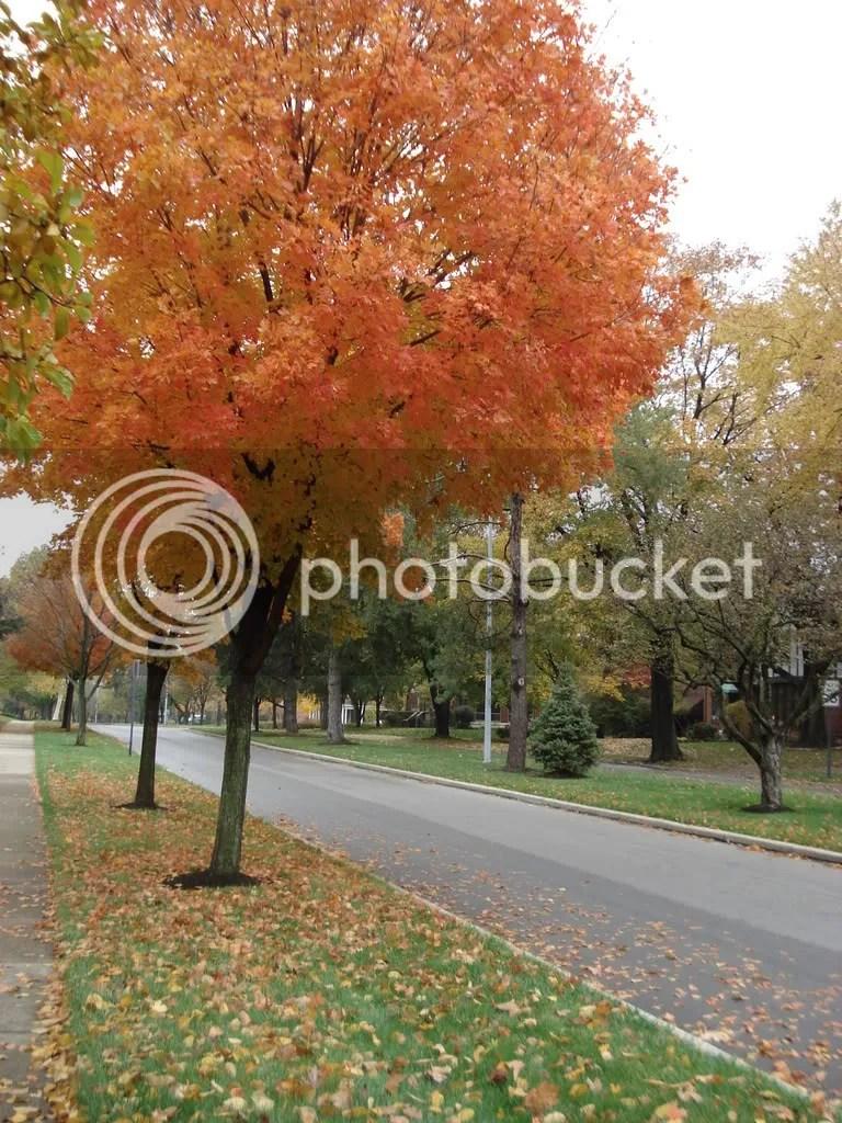 A tree lined street in Oakwood, Ohio