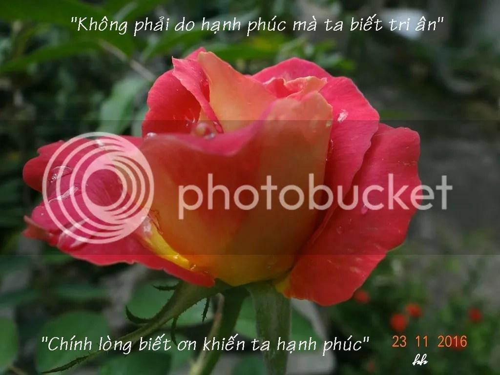 photo Rose_zpsaxorr8bu.jpg