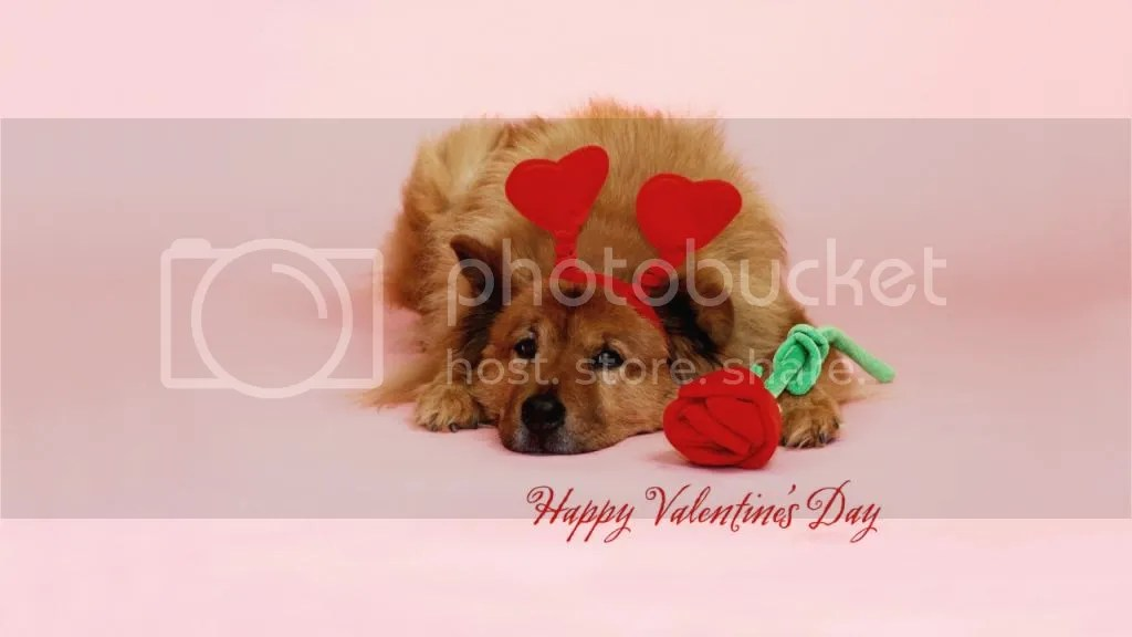 For Valentine photo Valentine2_zps4b6c28b0.jpg