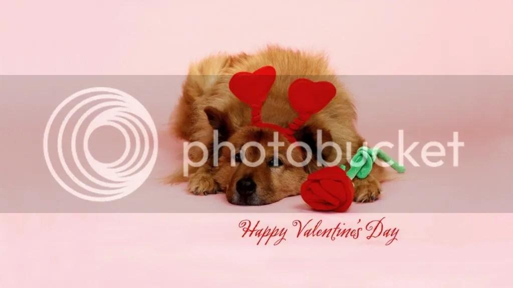 For Valentine photo Valentine2_zps4b6c28b0.jpg