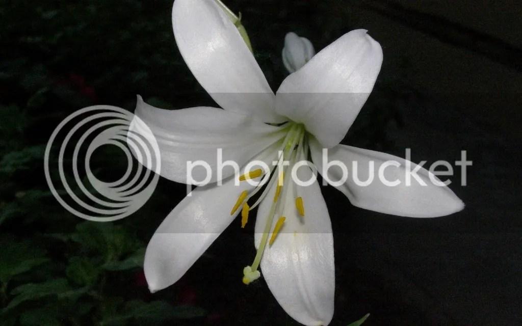 photo White2_zpsu17kszsm.jpg