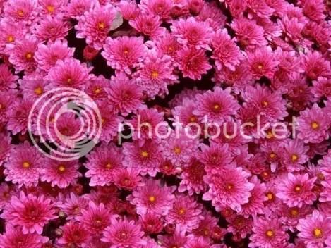 photo flowers_gift19.jpg