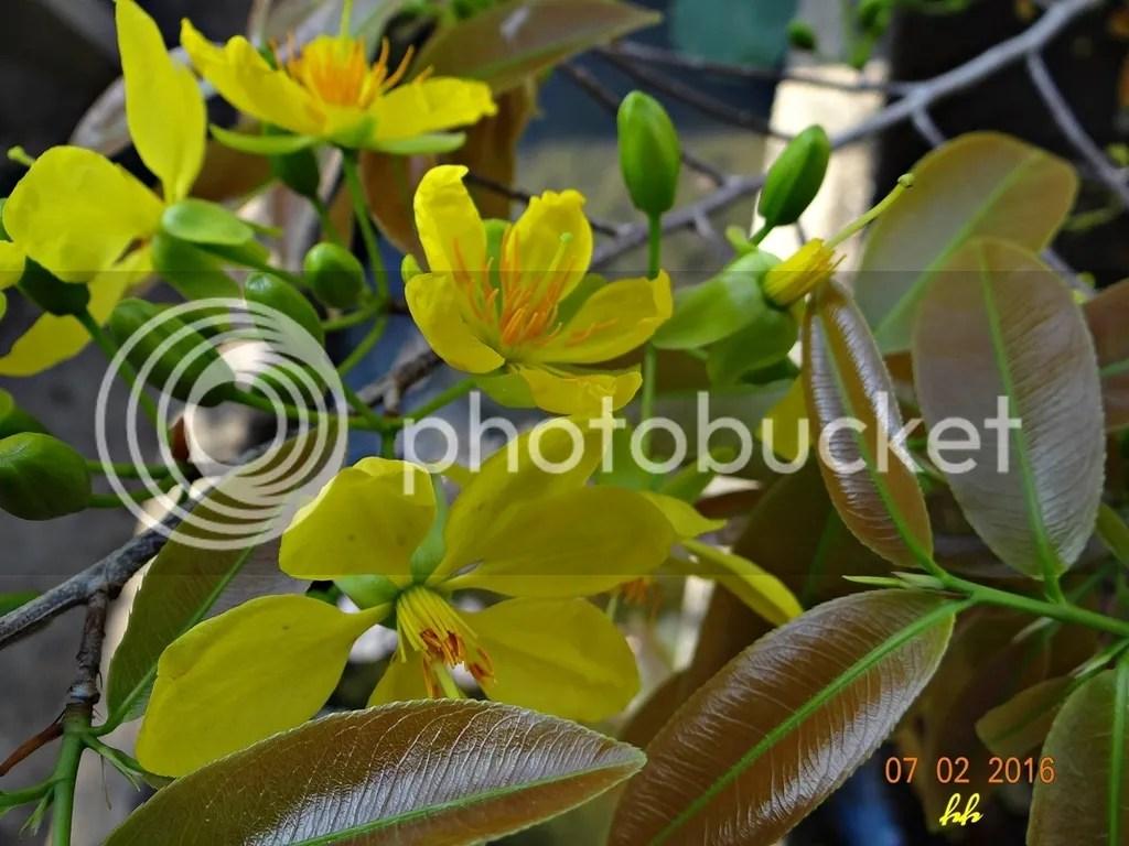 photo Mai 1 1_zpsmxuxctub.jpg