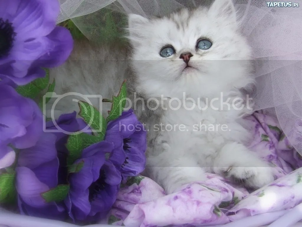 photo cat flower_zpsbribwlgb.jpg