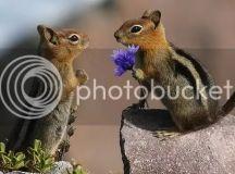 Cute Squirrels | Animal Space
