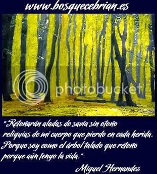 bosque cebrián