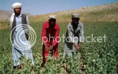 trafico drogas afganistan
