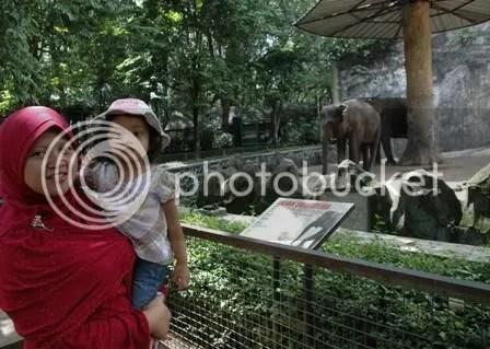 E.. lephant..