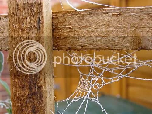 Teia de aranha congelada