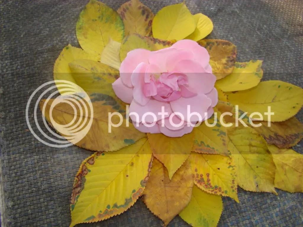 Frunze şi petale
