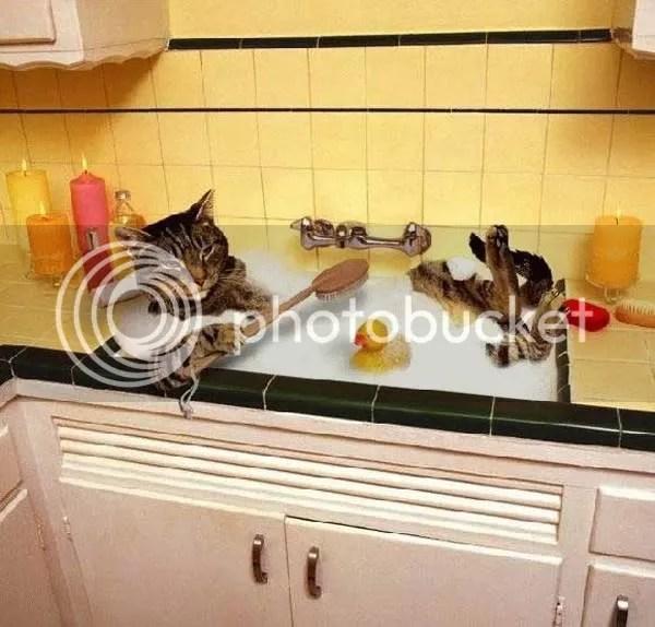 gatobano.jpg gato batea image by Soila03