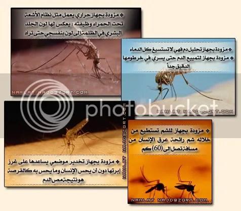 namlah-b3o9ah-3.jpg picture by elhanem