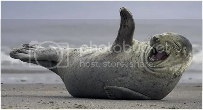A Laughing Walrus?
