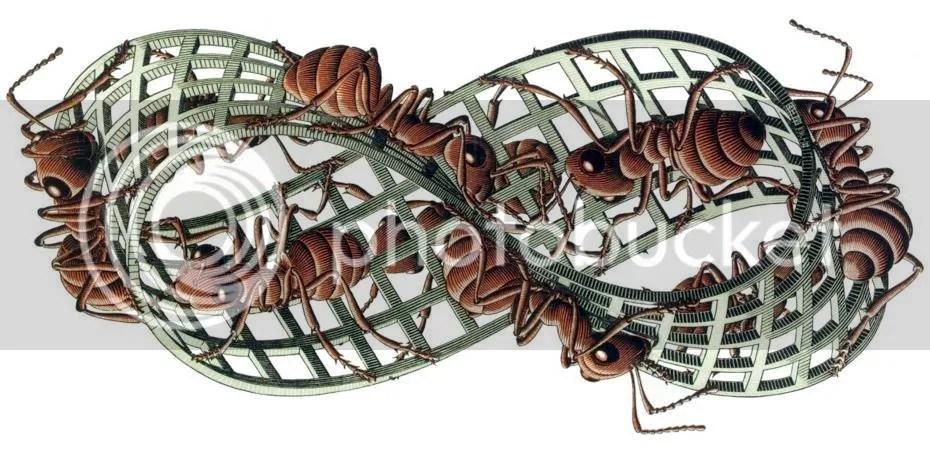 Il nastro di Moebius secondo Escher