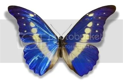 brilindosas borboletas