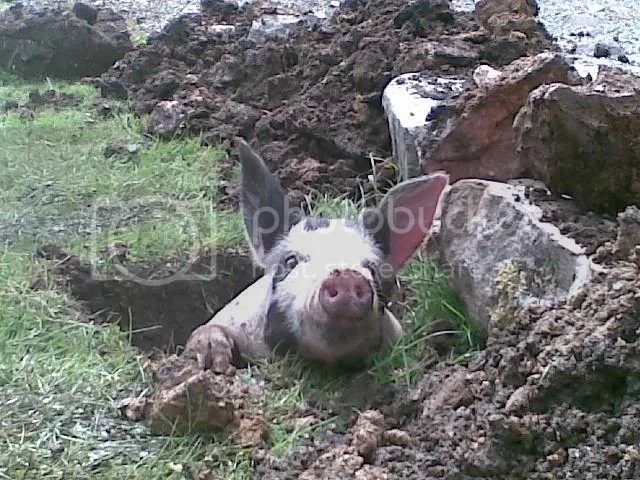 Pig in a hole