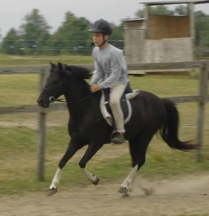 Zac & Vixen - Starting Point Stables - 2005