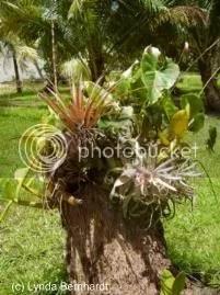 Plant in trunk (c) Lynda Bernhardt