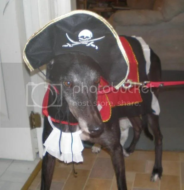Dog dressed as pirate