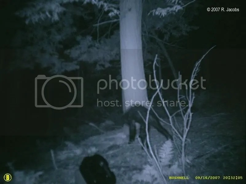 2_creature_med.jpg bigfoot image by cultivator_photo