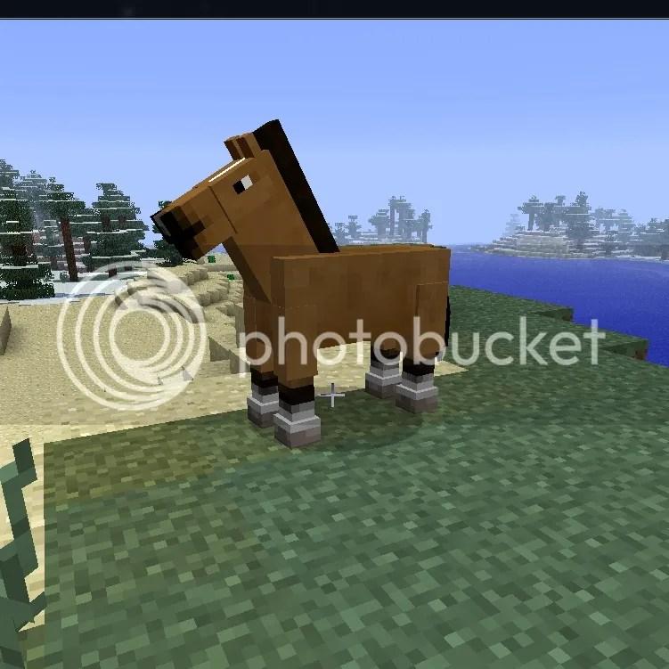 Pretty horse!