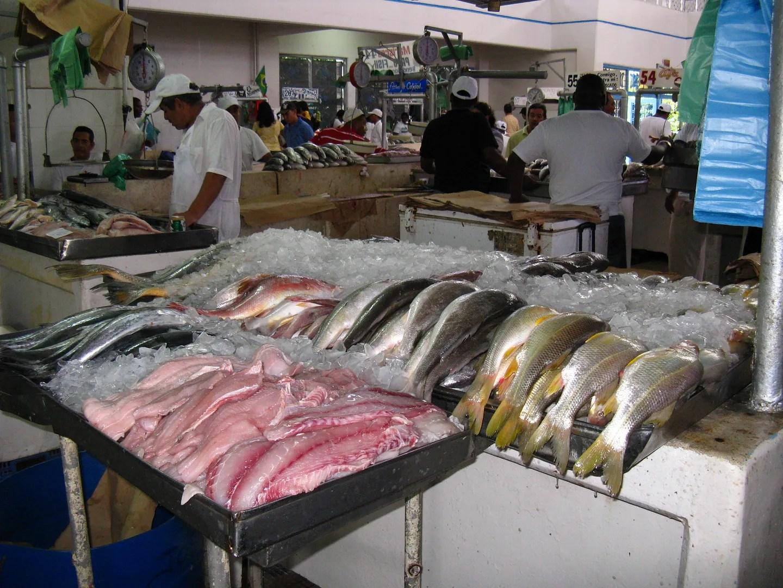 A seafood market in panama lingua franca for Fish market panama city beach