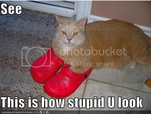 Funny cat shoes